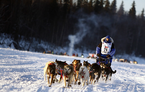 man riding sled pulled by pack of dogs