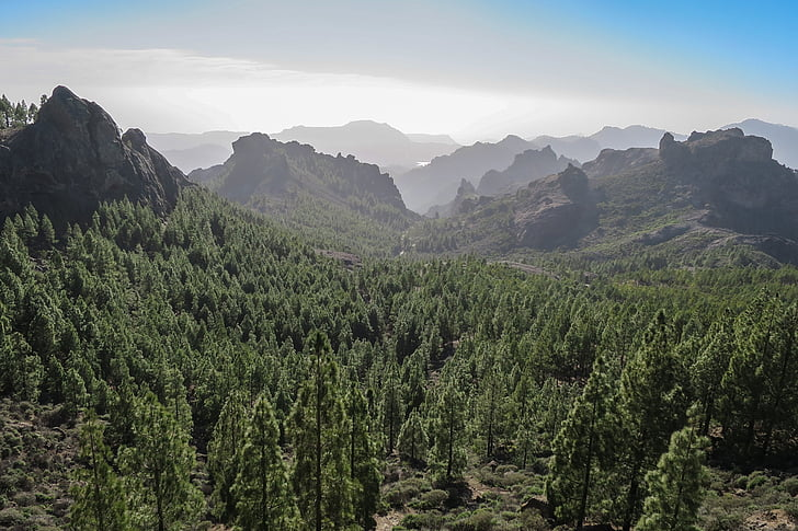 aerial view photography of mountain surrounded of trees