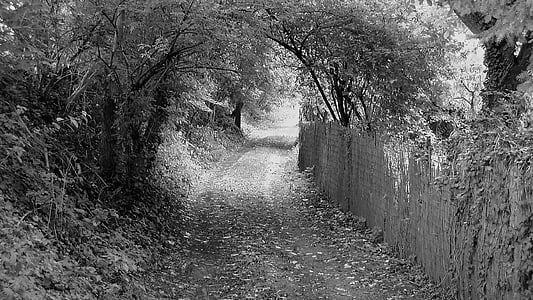 grayscale photography of dirt road