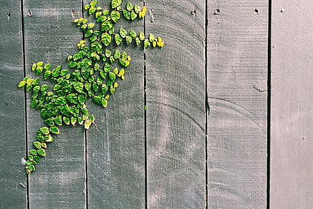green leaves on gray wood surface