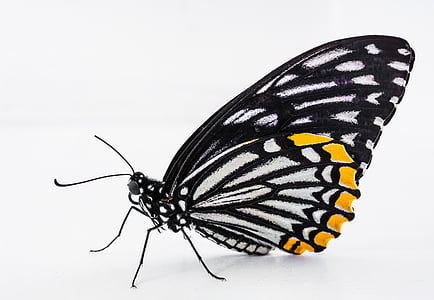 close up photo of paper kite butterfly